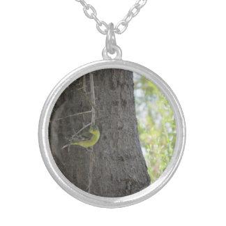 Collar del Goldfinch