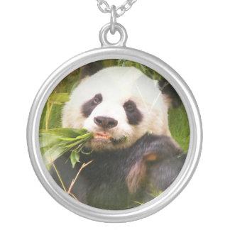 Collar del hábitat de la panda
