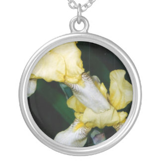 Collar del iris amarillo