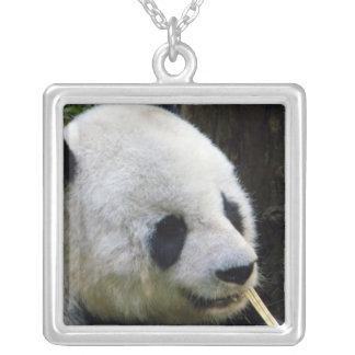 Collar del Looker de la panda