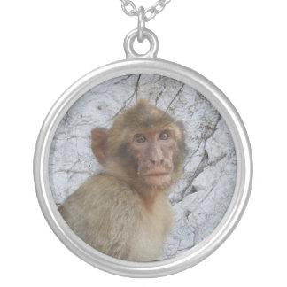 Collar del mono de Gibraltar