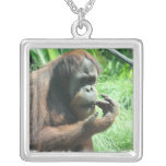 Collar del mono del orangután