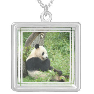 Collar del oso de panda