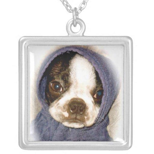 Collar del perrito de Boston Terrier de los azules