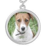 Collar del perro de Jack Russell Terrier