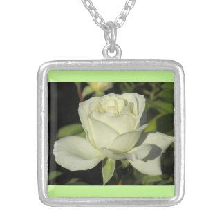 Collar del rosa blanco