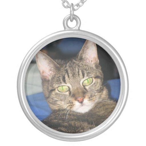 Collar del Sass del gatito del Calypso