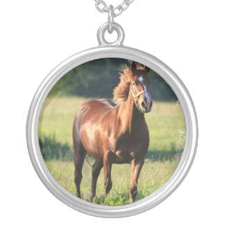 Collar derecho del caballo de la castaña