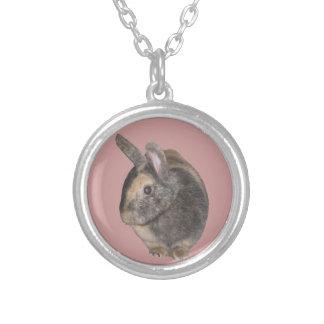 Collar dulce del conejo