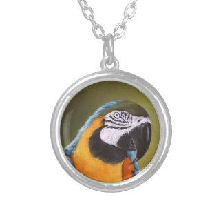 Collar hermoso del Macaw