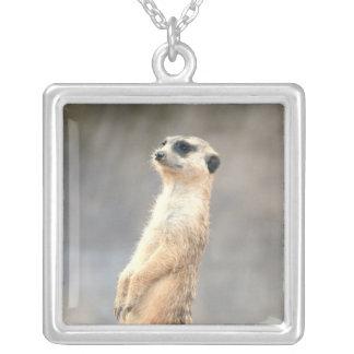 Collar lindo de Meerkat