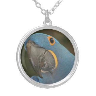 Collar plateado plata media del Macaw del jacinto