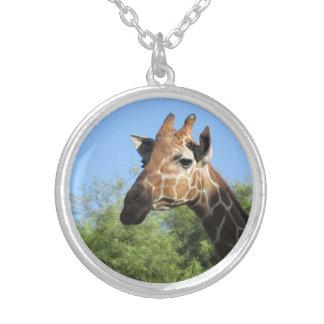 Collar principal de la jirafa