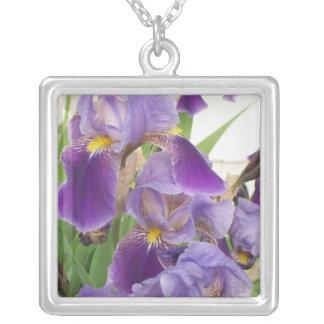 Collar púrpura del iris