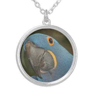 Collar redondo del Macaw del jacinto