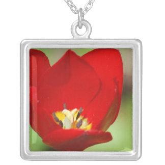 Collar rojo del tulipán