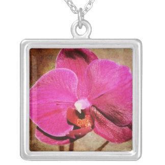 Collar rosado sucio de la orquídea del
