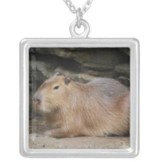 Collar salvaje del Capybara