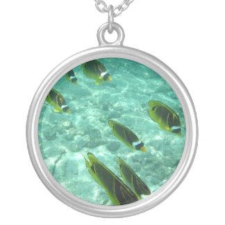 Collar subacuático tropical de los pescados