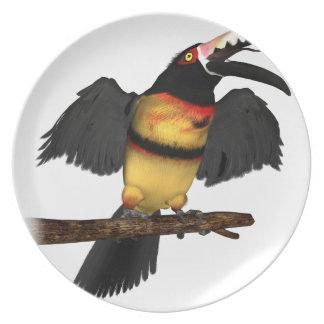 Collared Aracari Toucan Plate