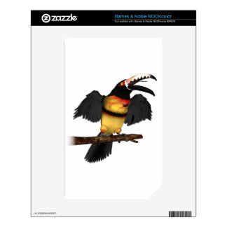 Collared Aracari Toucan Skin For The NOOK Color