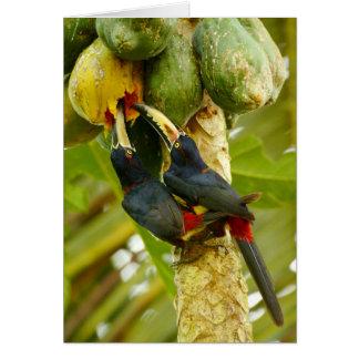 Collared Aracaris Card