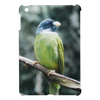 Collared Finch-Billed Bulbul iPad Mini Covers