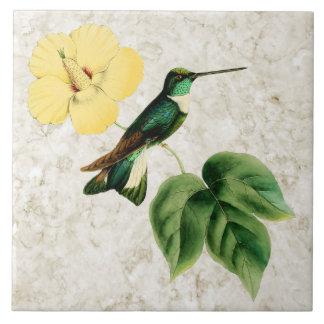 Collared Inca Hummingbird Ceramic Tile