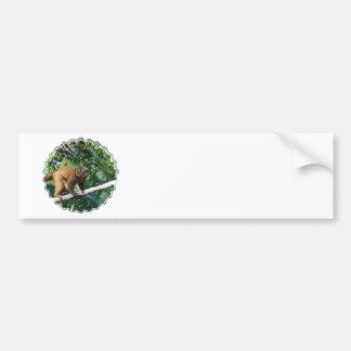 Collared Lemur Bumper Sticker