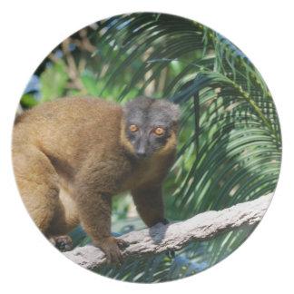 Collared Lemur Plate