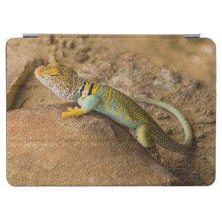 Collared Lizard iPad Air Cover