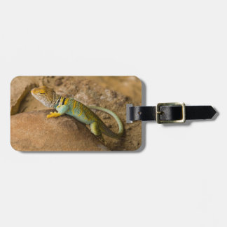 Collared Lizard Luggage Tag