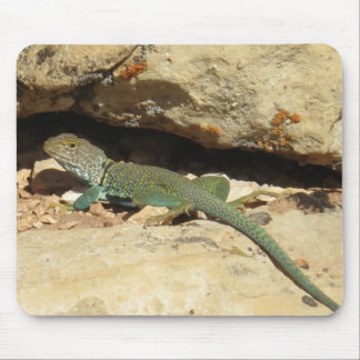 Collared lizard mouse pads
