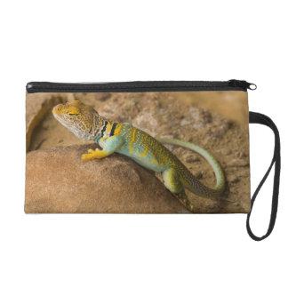 Collared Lizard Wristlet Purse