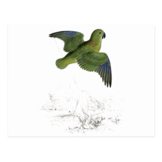Collared Parrakeet by Edward Lear Postcard