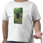 Collared Peccary, Javelina, Tayassu tajacu, T-shirt