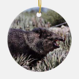 Collared peccary (javelina) yawning amid flowering christmas tree ornaments