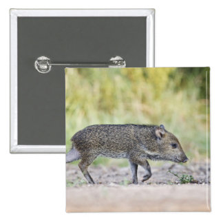 Collared peccary juvenile button