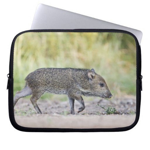 Collared peccary juvenile computer sleeves