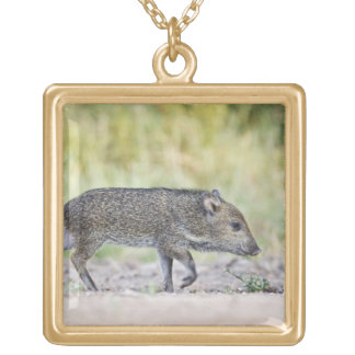 Collared peccary juvenile gold plated necklace