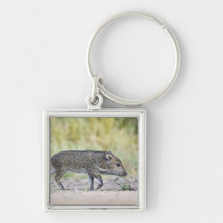 Collared peccary juvenile key chains