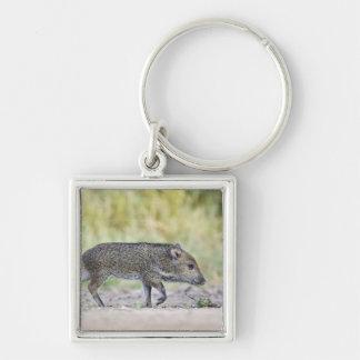 Collared peccary juvenile Silver-Colored square keychain