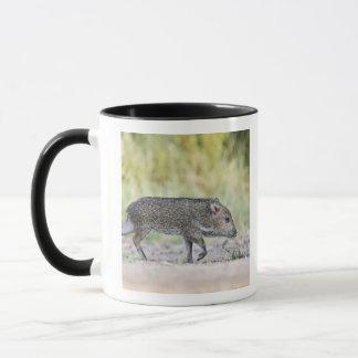 Collared peccary juvenile mug