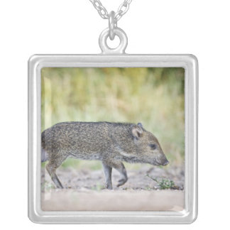 Collared peccary juvenile silver plated necklace