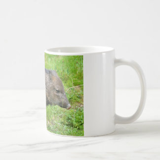 Collared Peccary on grass Coffee Mug