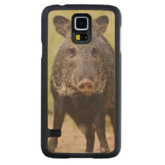 Collared Peccary Pecari tajacu) adults, Santa Carved® Maple Galaxy S5 Case