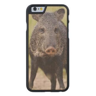 Collared Peccary Pecari tajacu) adults, Santa Carved Maple iPhone 6 Slim Case