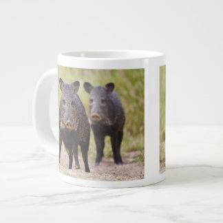 Collared Peccary Pecari tajacu) adults, Santa Large Coffee Mug