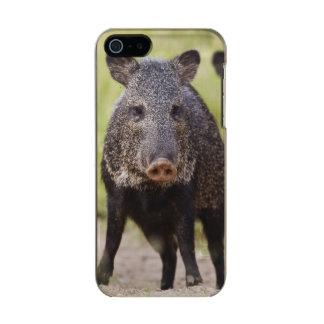Collared Peccary Pecari tajacu) adults, Santa Metallic Phone Case For iPhone SE/5/5s