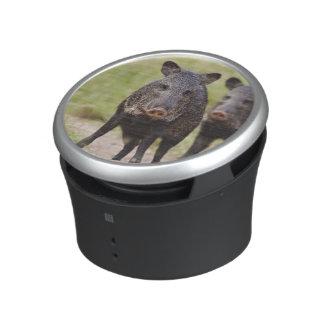 Collared Peccary Pecari tajacu) adults, Santa Bluetooth Speaker